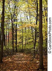 φθινόπωρο , 572, δάσοs , δέντρα