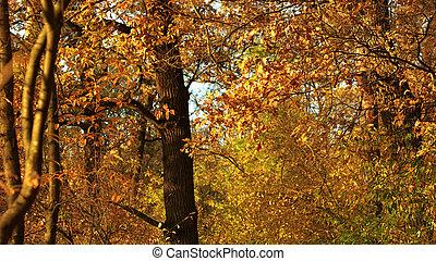 φθινόπωρο , forest., φύση