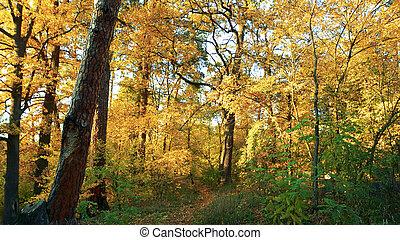 φθινόπωρο , forest., χρωματιστός φυλλοειδής διακόσμηση
