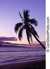 φοινικόδεντρο , ηλιοβασίλεμα