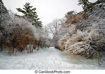 φορτωμένος , πάγοs , δέντρα , άγω , διαμέσου , ατραπός