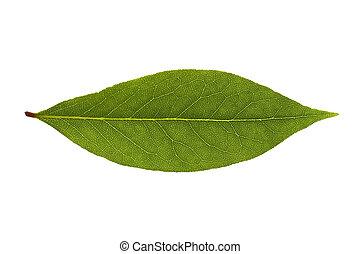φρέσκος , κόλπος , leaves., βοτάνι