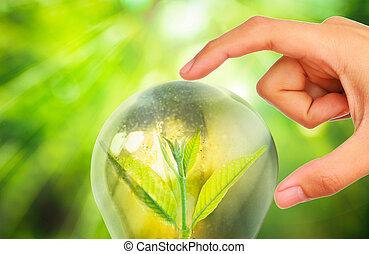 φρέσκος , πράσινο , μικρό , εργοστάσιο , μέσα , λαμπτήρας φωτισμού , με , θολός , πράσινο , φύση