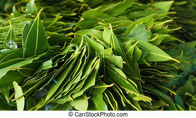 φρέσκος , φύλλα , πράσινο , leaves., δάφνη