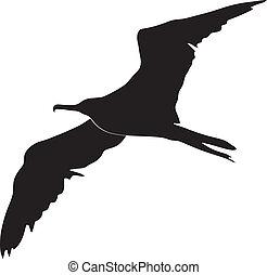 φρεγάτα πουλί