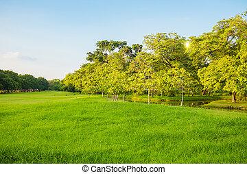 φυσικός , θέα , από , αγίνωτος γρασίδι , με , δέντρα ,...
