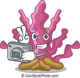 φωτογράφος , ροζ , φύκι , απομονωμένος , μέσα , ο ,...
