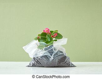 φόντο. , φυτό θερμοκηπίου , ακμάζων , duotone , αγαλματώδης ...