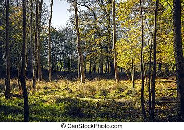 φύλλα , δέντρα , κίτρινο , πέφτω