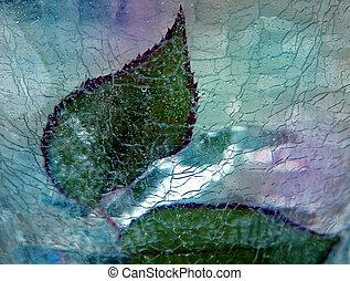 φύλλα , κάτω από , πάγοs
