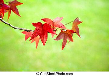 φύλλα , πέφτω