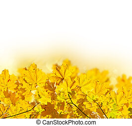 φύλλα , σφένδαμοs , πέφτω