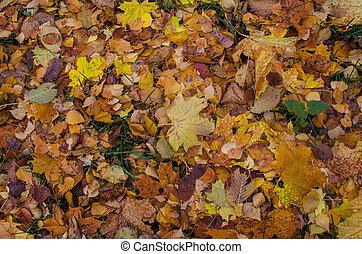 φύλλα , φθινόπωρο , φόντο , γραφικός , πέφτω , texture.