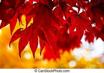 φύλλα , φόντο , πέφτω