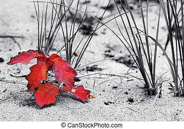 φύλλο , αμμόλοφος , κόκκινο