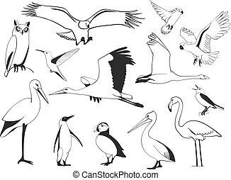 χέρι , μετοχή του draw , πουλί , θέτω , μικροβιοφορέας