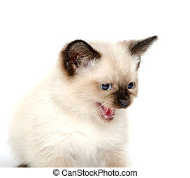 χαριτωμένος , αποδοκιμάζω , γατάκι