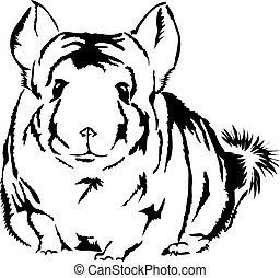χαριτωμένος , ατενίζω , δέρμα του καλλίμαλου ζώου της νότιας αμερικής , περίεργος , lanigera), (chinchilla