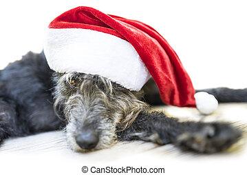 χαριτωμένος , μαύρο άγκιστρο , με , διακοπές χριστουγέννων καπέλο