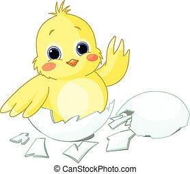 χαριτωμένος , μικρός , κοτόπουλο