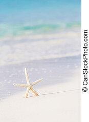 χαριτωμένος , παραλία , αστέρι , θάλασσα