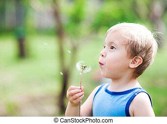 χαριτωμένος , φυσώντας , φύση , αγόρι , άγριο ραδίκι , φόντο
