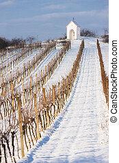 χειμώναs , αμπέλι , κοντά , hnanice, νότιος , moravia , τσεχικός δημοκρατία