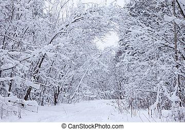 χειμώναs , δάσοs