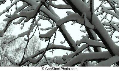 χειμώναs ,