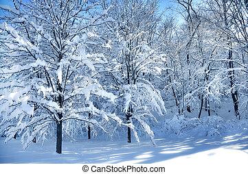 χιόνι , δέντρα