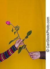 χορήγηση , τριαντάφυλλο