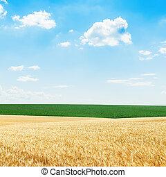χρυσαφένιος , συγκομιδή , και , πράσινο , αγρός , κάτω από , μπλε , συννεφιά