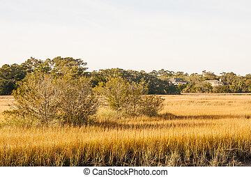 χρυσαφένιος , wetland , βάλτος , δέντρα