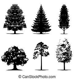 χρώμα , δέντρο , σκοτάδι , απεικονίζω σε σιλουέτα , μικροβιοφορέας , διάφορος , μαύρο