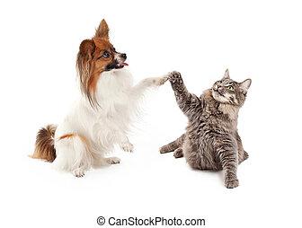 ψηλά , papillon, πέντε , σκύλοs , γάτα