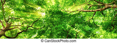 ψηλά , treetops , διαμέσου , sunrays , λάμποντας