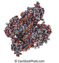 όγκος , domain), χημικός , πρωτεΐνη , (core, suppressor, δομή , p53