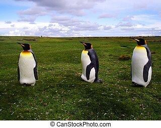 όμορφος , άναξ πιγκουίνος