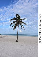 όμορφος , αετόμορφο αναλόγιο ακρογιαλιά , aruba , ακτή