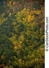 όμορφος , βουνό , δάσοs , τοπίο