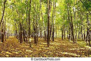 όμορφος , βραδιά επιφανής , φθινόπωρο , ακτίνα , δάσοs
