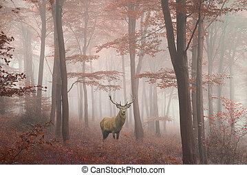 όμορφος , γραφικός , εικόνα , ελάφι , φθινόπωρο , άγαμος άνδρας , δάσοs , ομιχλώδης , τοπίο , κόκκινο