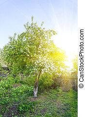 όμορφος , δέντρο , κήπος