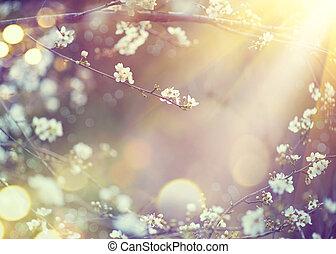 όμορφος , είδος γεγονός , με , ακμάζων , δέντρο , και , επιφανής αναλαμπή