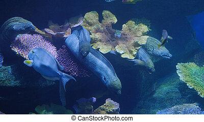 όμορφος , εξωτικός , βλέπω , fish, μέσα , ένα , aquarium., υποβρύχιος , σκηνή