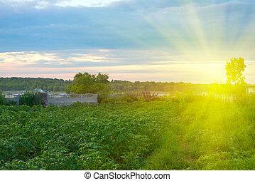 όμορφος , ηλιοβασίλεμα , πράσινο , κήπος