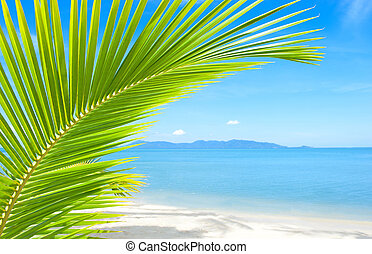 όμορφος , θερμότατος ακρογιαλιά , με , φοινικόδεντρο , και , άμμοs
