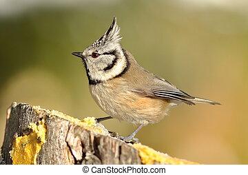 όμορφος , κήπος , πουλί , σε , τροφοδότης