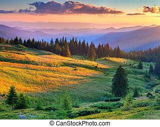 όμορφος , καλοκαίρι , τοπίο , μέσα , ο , βουνήσιοσ. , ανατολή