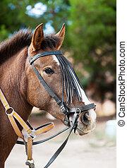 όμορφος , κεφάλι , άλογο , φόντο , φύση